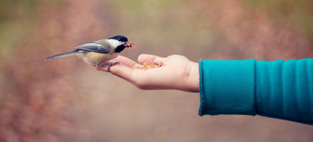 hand-feeding-bird-hero-image