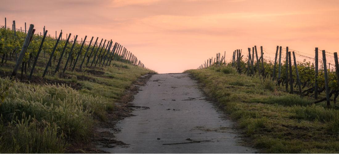 path-between-vinyards-sunset
